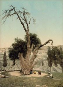 Die Eiche Abrahams