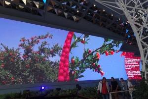 Iranische Granatäpfel