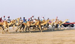 Camel-Racing-e1410948695152